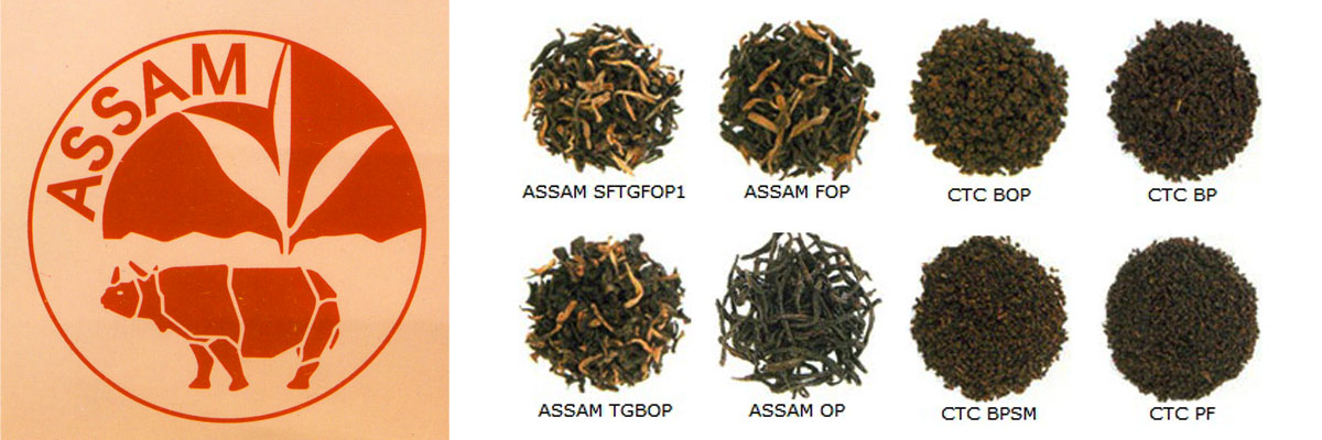 Assam Tea By Lalchand Babulal / Berlia Gold / Tea Traders in Kolkata India